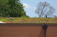 Green roof on a building in Virginia, USA.
