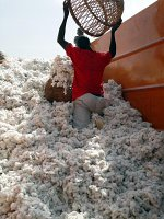 Cotton seller in Cameroon